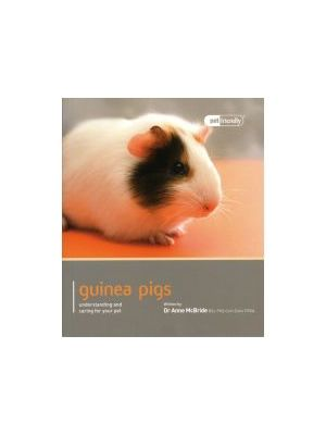 Guinea Pig Pet Friendly