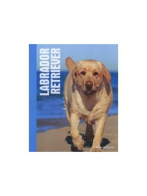 Animal Series Labrador Retriever